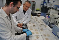 Researchers with samples of carpets