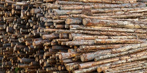 Researchers Demonstrate New Method to Produce Succinic Acid from Timber Waste