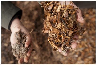 Forestry residues plant avantium
